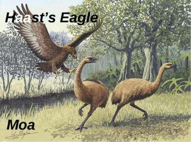 Haast's Eagle Moa