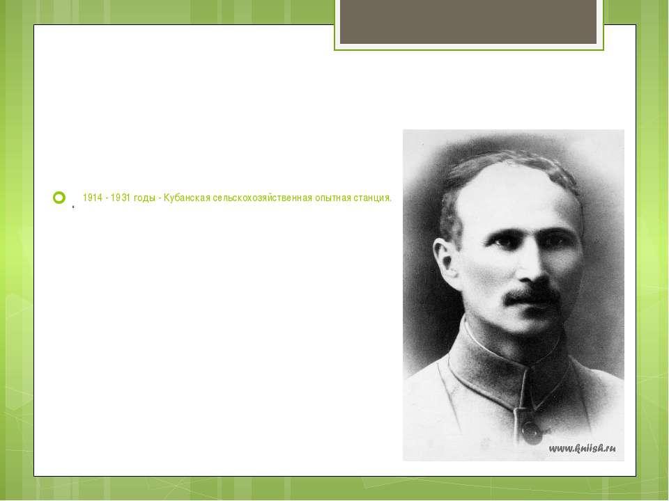 1914 - 1931 годы - Кубанская сельскохозяйственная опытная станция.  .