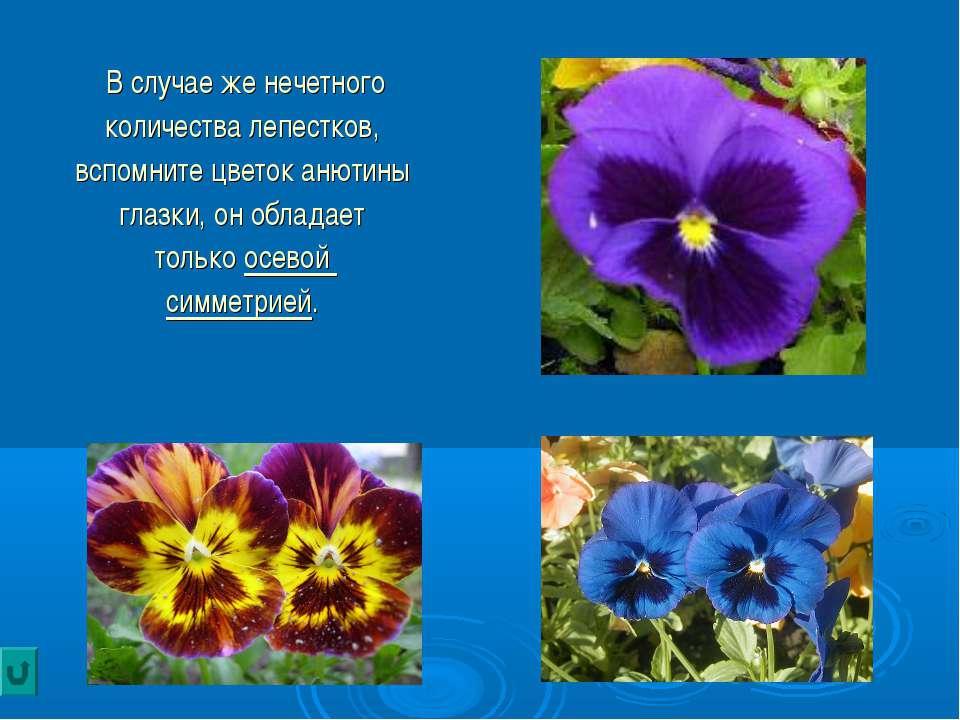 В случае же нечетного количества лепестков, вспомните цветок анютины глазки, ...
