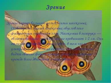 Зрение Зрение играет большую роль в жизни насекомых. Особенности зрения насек...