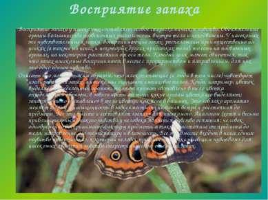 Восприятие запаха Восприятие запаха у насекомых составляет особое стереохимич...