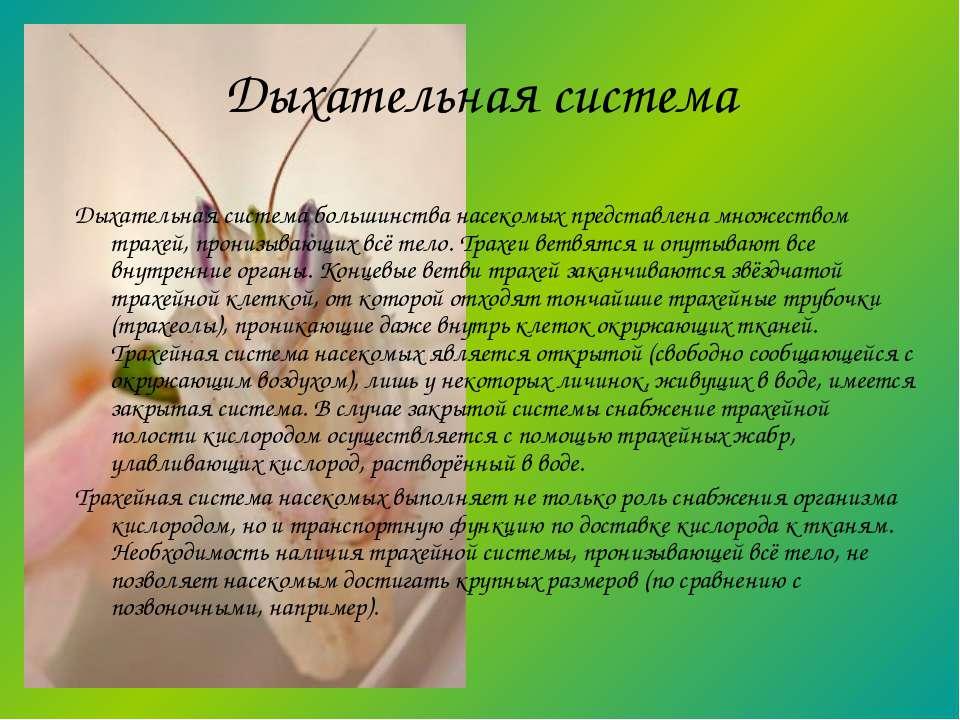 Дыхательная система большинства насекомых представлена множеством трахей, про...