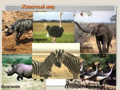 Животный мир гиена страус бегемот Птица-секретарь зебры слон