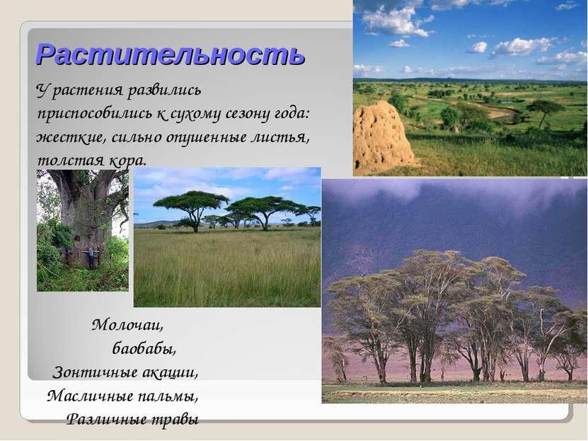 Растительность Молочаи, баобабы, Зонтичные акации, Масличные пальмы, Различны...