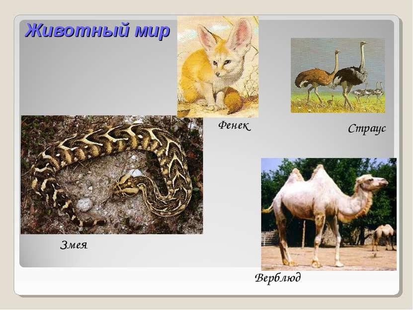 Животный мир Змея Верблюд Фенек Страус