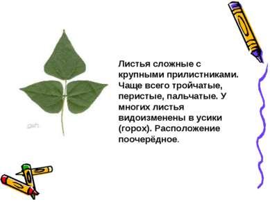 Листья сложные с крупными прилистниками. Чаще всего тройчатые, перистые, паль...