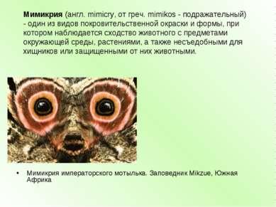 Мимикрия императорского мотылька. Заповедник Mikzue, Южная Африка Мимикрия(а...