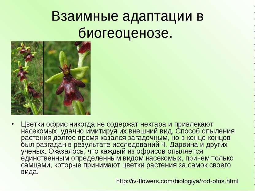 Взаимные адаптации в биогеоценозе. Цветки офрис никогда не содержат нектара и...