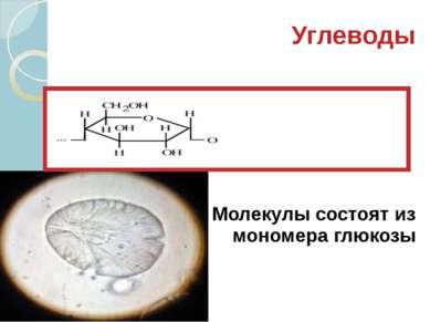 Углеводы Молекулы состоят из мономера глюкозы