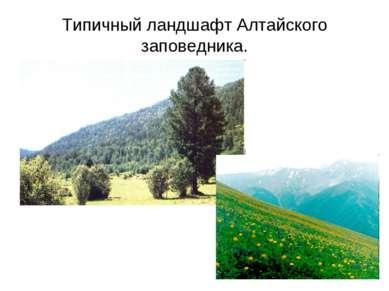 Типичный ландшафт Алтайского заповедника.