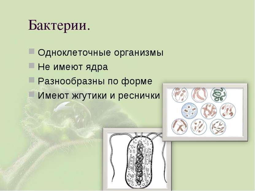 Бактерии. Одноклеточные организмы Не имеют ядра Разнообразны по форме Имеют ж...