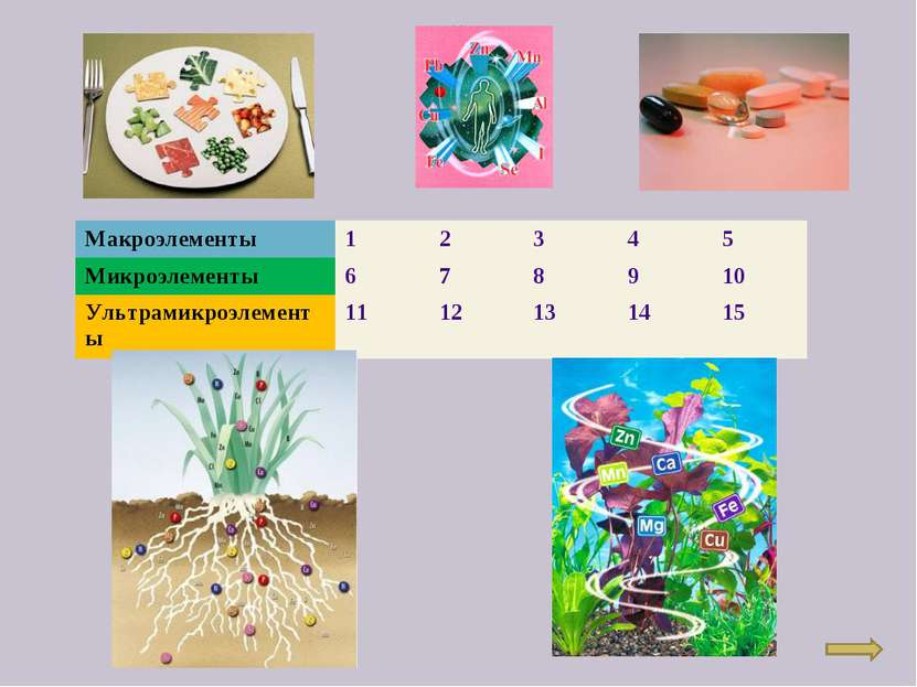 Макроэлементы 1 2 3 4 5 Микроэлементы 6 7 8 9 10 Ультрамикроэлементы 11 12 13...