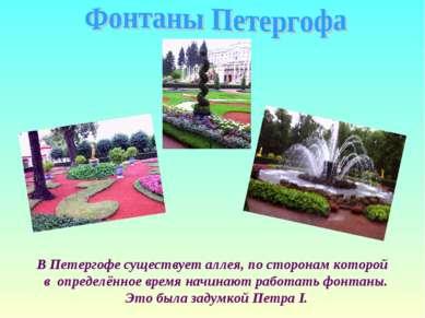 В Петергофе существует аллея, по сторонам которой в определённое время начина...