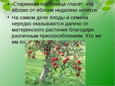 Старинная пословица гласит, что яблоко от яблони недалеко катится. На самом д...