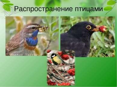 Распространение птицами