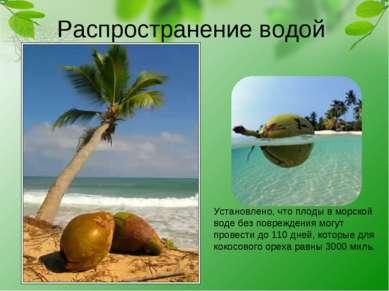 Распространение водой Установлено, что плоды в морской воде без повреждения м...
