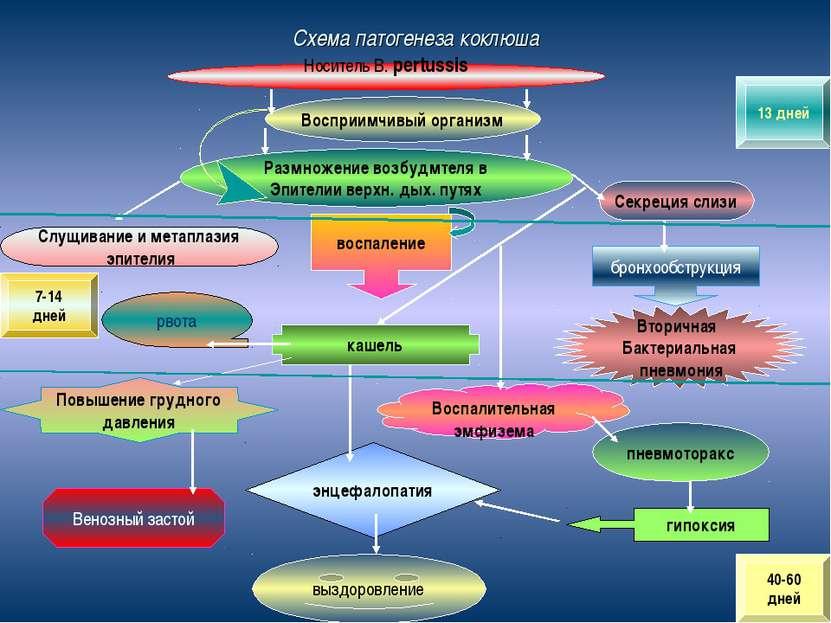 Схема патогенеза коклюша Носитель В. pertussis Восприимчивый организм Размнож...