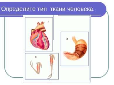 Определите тип ткани человека.