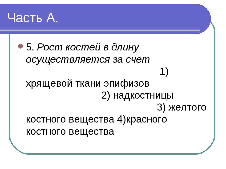 Часть А. 5. Рост костей в длину осуществляется за счет 1) хрящевой ткани эпиф...