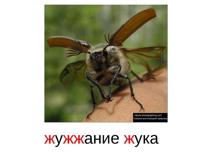 Скачать бесплатно звук жужжание жука