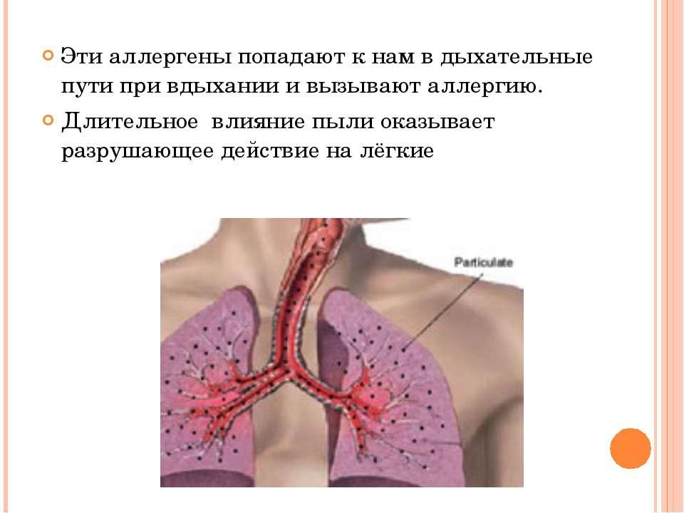 Эти аллергены попадают к нам в дыхательные пути при вдыхании и вызывают аллер...