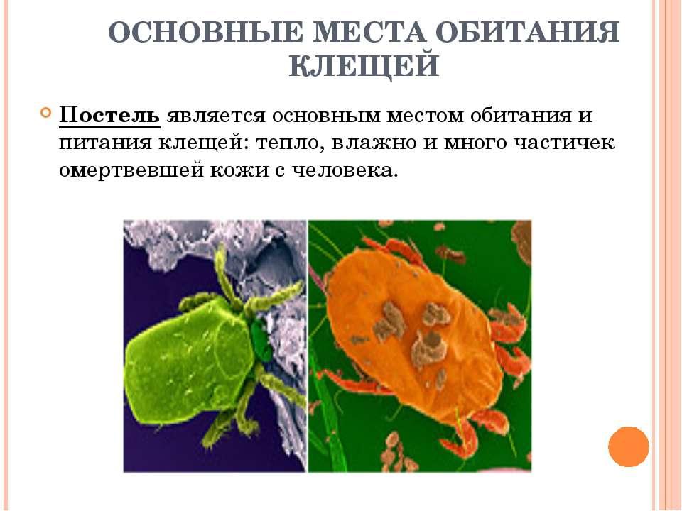 ОСНОВНЫЕ МЕСТА ОБИТАНИЯ КЛЕЩЕЙ Постель является основным местом обитания и пи...