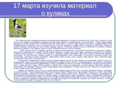 17 марта изучила материал о куликах Это птицы мелкой и средней величины и раз...