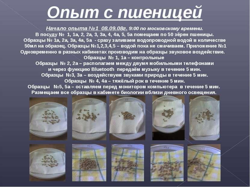 Опыт с пшеницей Начало опыта №1 08.09.08г. 9:00 по московскому времени. В пос...