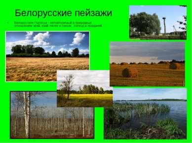 Белорусские пейзажи Белорусское Полесье - неповторимый в природных отношениях...