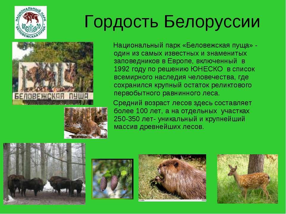 Гордость Белоруссии Национальный парк «Беловежская пуща» - один из самых изве...