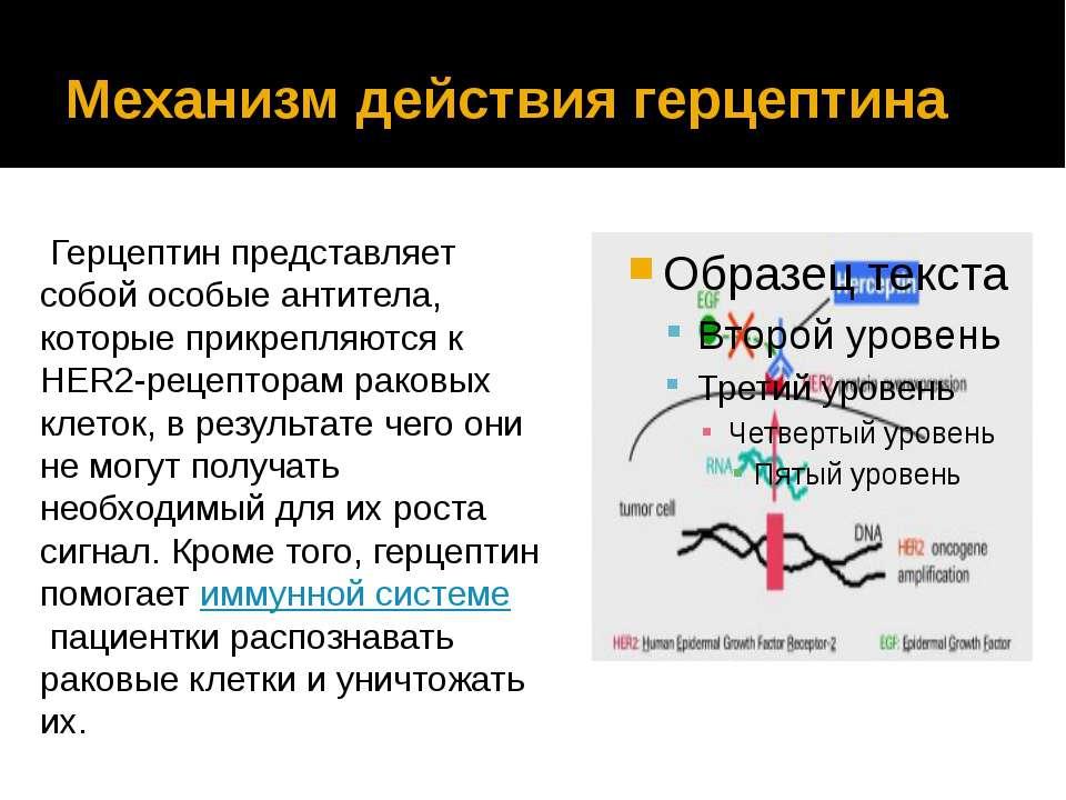 Механизм действия герцептина Герцептин представляет собой особые антитела, ко...
