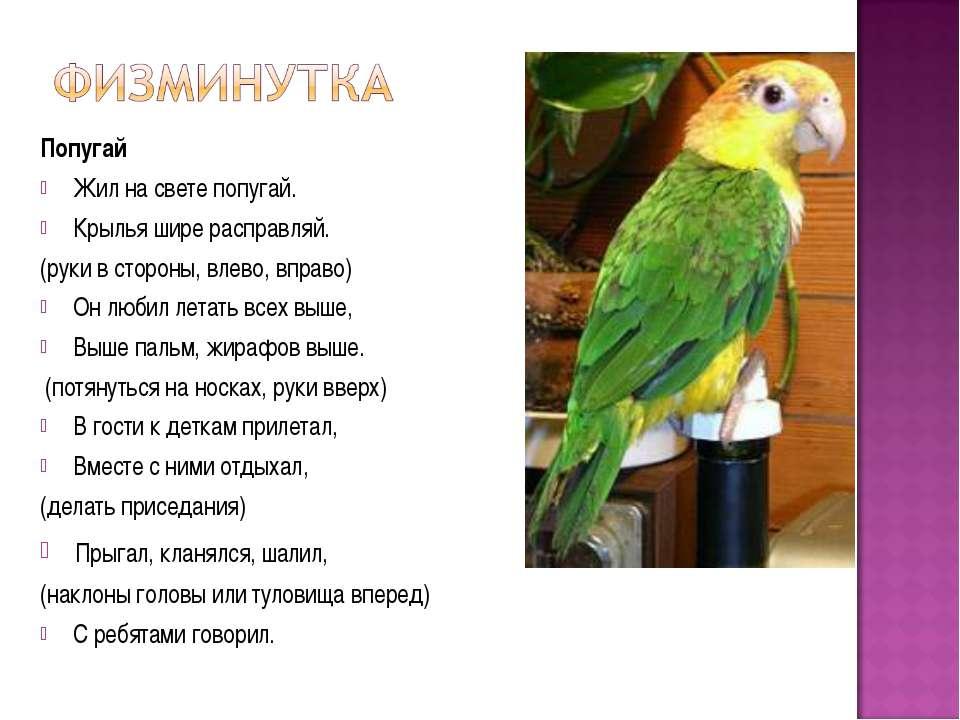 Попугай Жил на свете попугай. Крылья шире расправляй. (руки в стороны, влево,...