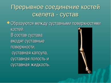 Прерывное соединение костей скелета - сустав Образуются между суставными пове...