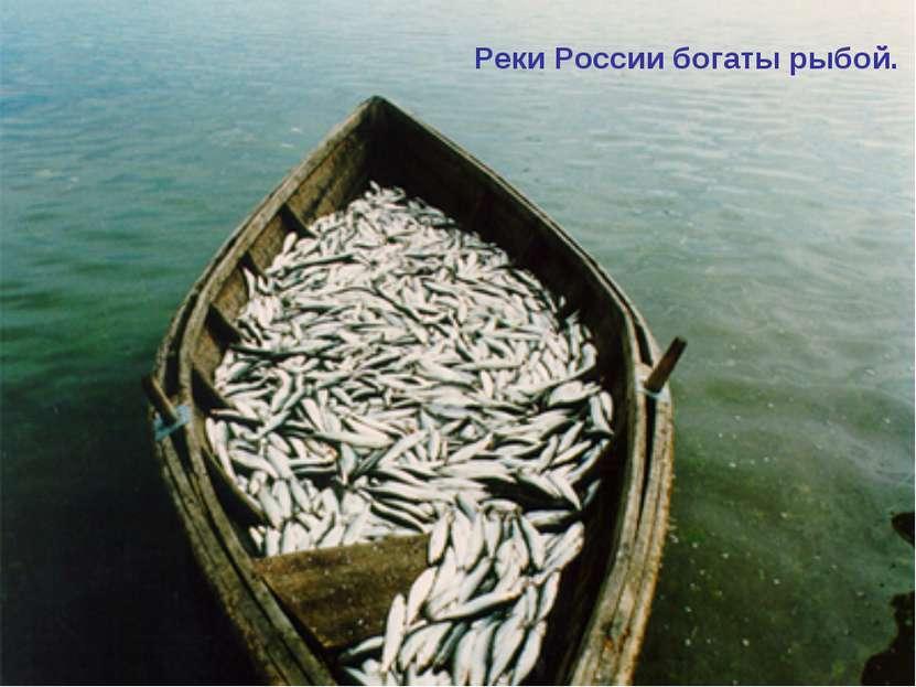 Реки России богаты рыбой.