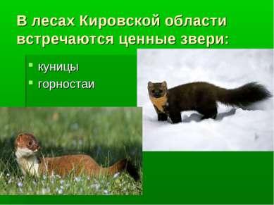 В лесах Кировской области встречаются ценные звери: куницы горностаи