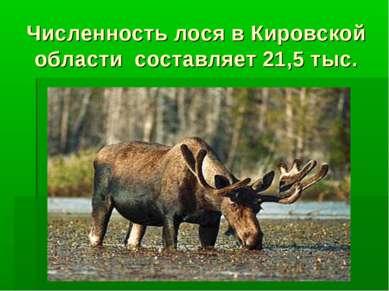 Численность лося в Кировской области составляет 21,5 тыс.