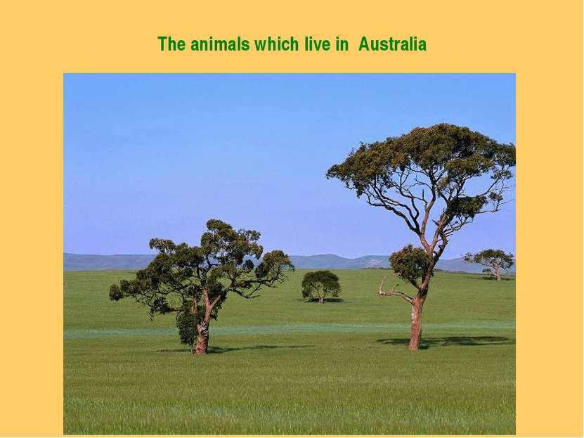 The animals which live in Australia