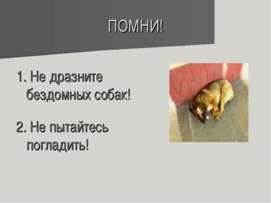ПОМНИ! 1. Не дразните бездомных собак! 2. Не пытайтесь погладить!