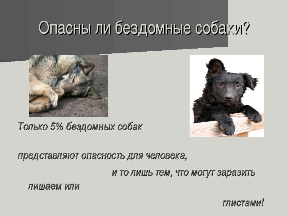 Опасны ли бездомные собаки? Только 5% бездомных собак представляют опасность ...