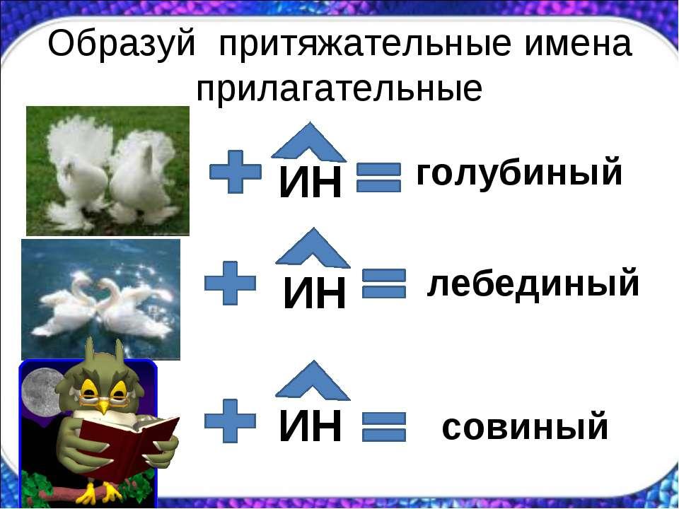 Образуй притяжательные имена прилагательные ИН голубиный ИН лебединый ИН совиный
