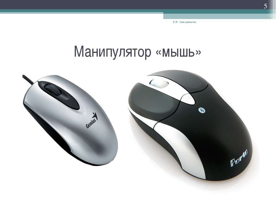 Манипулятор «мышь» Е.В. Заводчикова * Е.В. Заводчикова