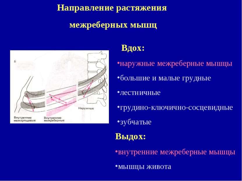 Направление растяжения межреберных мышц Вдох: наружные межреберные мышцы боль...