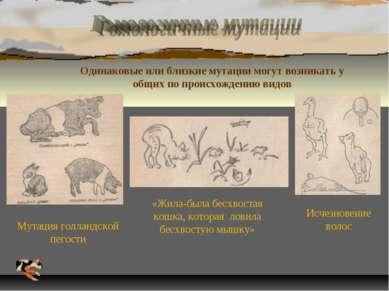 Одинаковые или близкие мутации могут возникать у общих по происхождению видов...