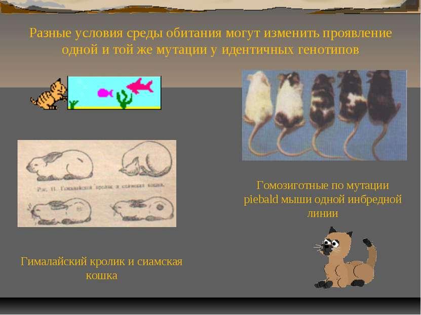 Гималайский кролик и сиамская кошка Разные условия среды обитания могут измен...