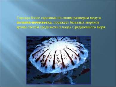 Гораздо более скромная по своим размерам медуза пелагия-ночесветка, поражает ...