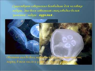 Существуют совершенно безобидные для человека медузы. Это всем известная стек...