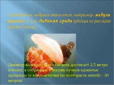 К ядовитым медузам относится, например, медуза цианея, ), или Львиная грива (...