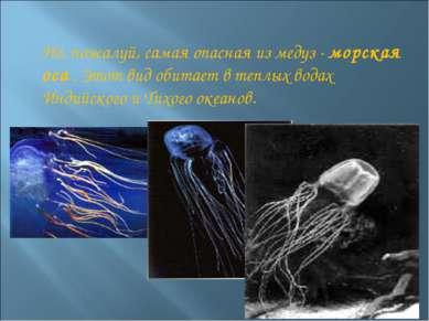 Но, пожалуй, самая опасная из медуз - морская оса . Этот вид обитает в теплых...