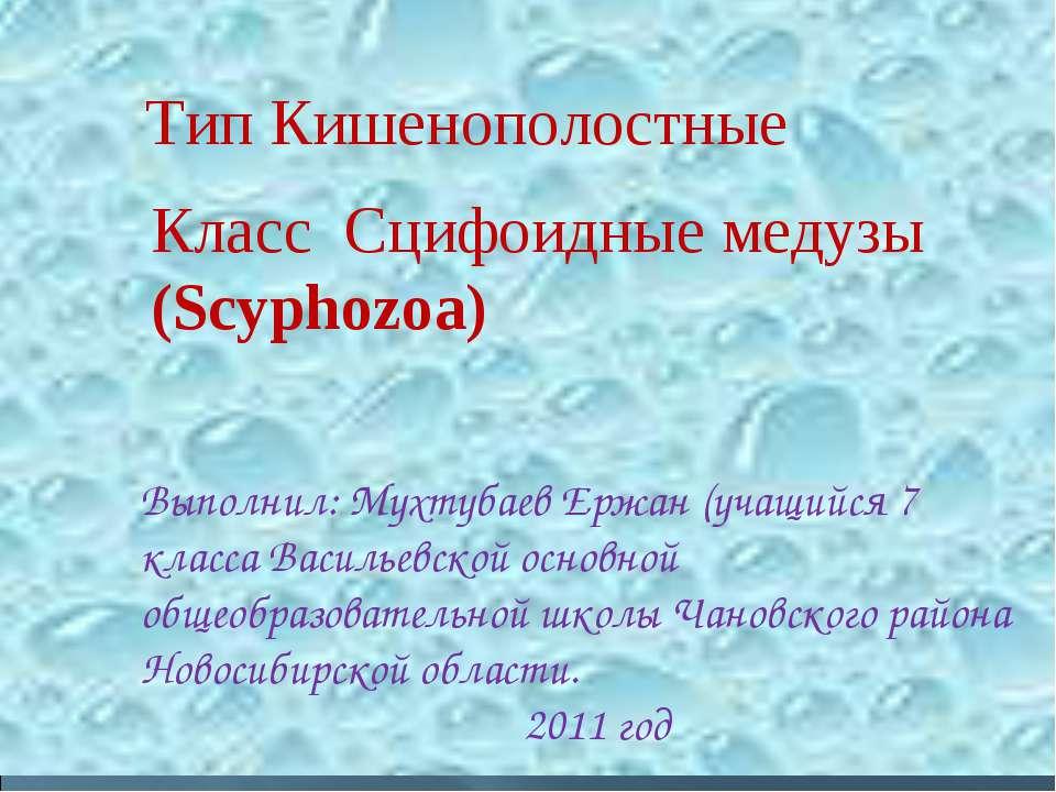 Класс Сцифоидные медузы (Scyphozoa) Тип Кишенополостные Выполнил: Мухтубаев Е...