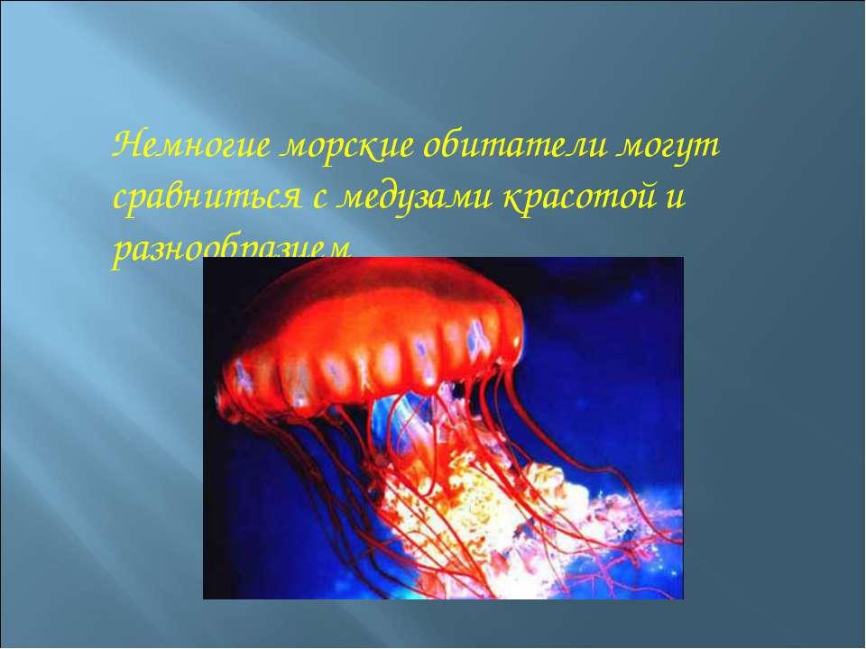 Немногие морские обитатели могут сравниться с медузами красотой и разнообразием